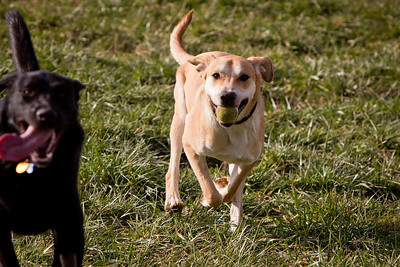 Gustav Duckworth at the  Wellington Dog Park on 12.12.2011