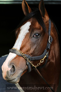 Union Rags gallops on the Keeneland main track on 4.19.2012  Assistant trainer, Peter Brette is on board.