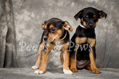 Photo outtakes - litter mates posing for a PSA for the Lexington Humane Society.