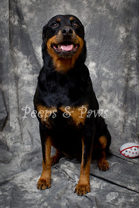 Sasha is a 5 yr old Rottweiler mix who just finished obedience school.  She was given up because her owner didn't have time for her.