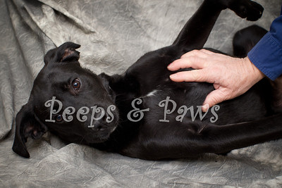 Matthew is a 6 month old black lab mix.  He's a huge lover and very friendly.  He will freely give kisses to anyone who wants them!