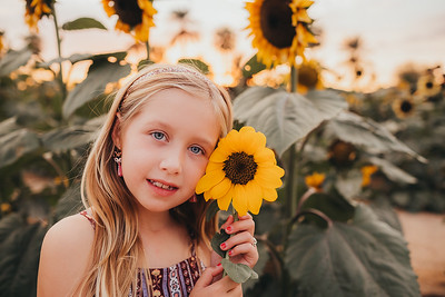 Sunflower- SunshynePIx-6358