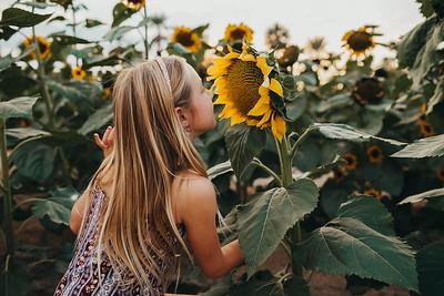 Sunflower- SunshynePIx-6225