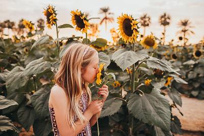 Sunflower- SunshynePIx-6352