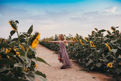Sunflower- SunshynePIx-6433