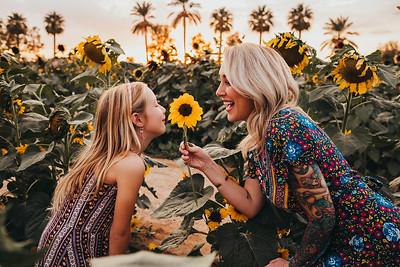 Sunflower- SunshynePIx-6315