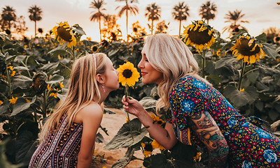 Sunflower- SunshynePIx-6310
