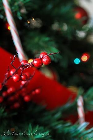 Grace Christmas Celebration-012