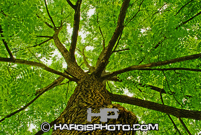 Hargis Photography-Look Up