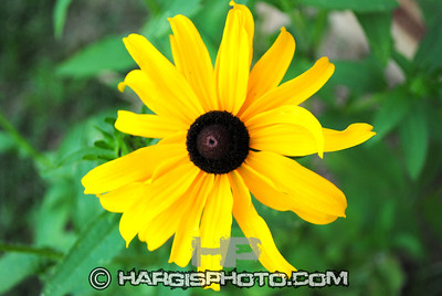 Hargis Photography-Garden Sun Franklin County, Frankfort, KY