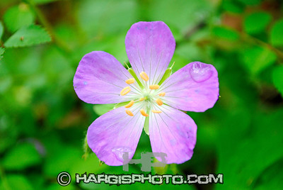 Hargis Photography-Pretty When Wet Rowan County, Morehead, KY