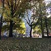 Central Park-1002