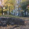 Central Park-1001