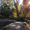 Central Park-1010
