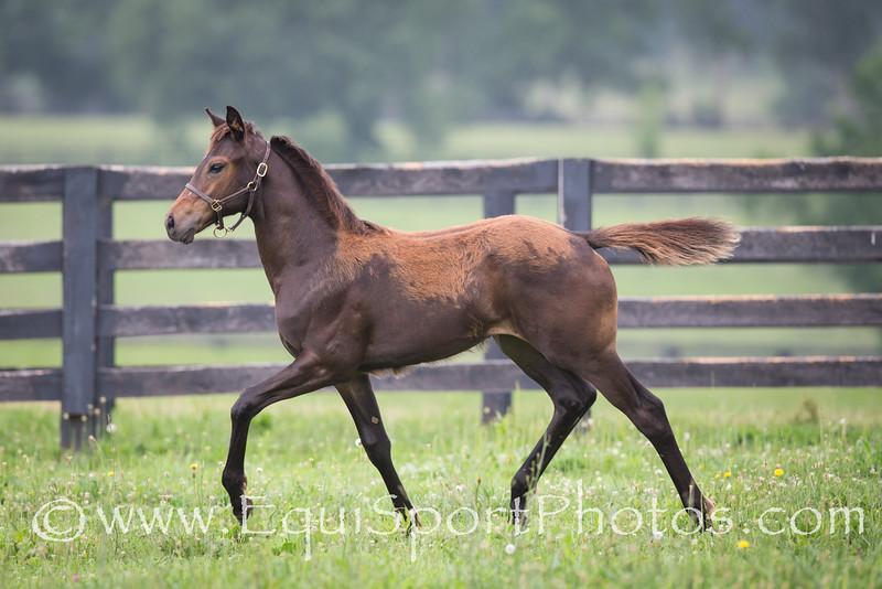 Darley… Denman foals '15