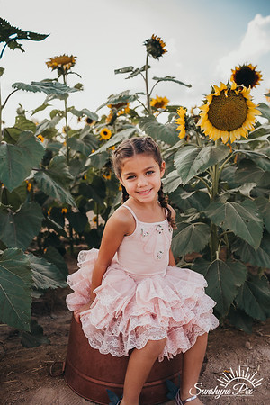 Sunflower- SunshynePIx-5676