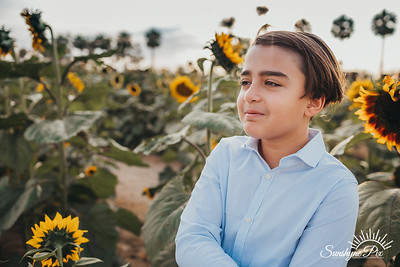 Sunflower- SunshynePIx-5710