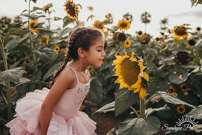 Sunflower- SunshynePIx-5684