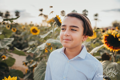 Sunflower- SunshynePIx-5705