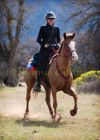 Susan Garlinghouse and grade TWH John Henry have been successful at the multi day rides, and recently won over all BC and fastest time at the 2012 Cuyama Oaks XP. They're at the finish line of the first day, a 55.
