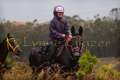 Erin Strand and her mule tough it out at the Montaña de Oro 50, which was cancelled due to hazardous trail conditions within the hour after this photo was taken. Morro Bay would have been visible in the background without the rain and fog.