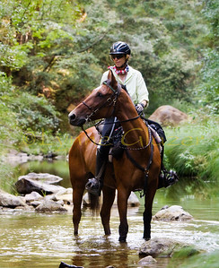 Michele Roush DVM and her accomplished Standardbred-Arab cross PR Tallymark take a break in Pescadero Creek during the Swanton Pacific 100.  Tally has over 3,000 miles and 11/11 100 mile completions.