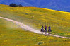My favorite Cuyama landscape with riders.
