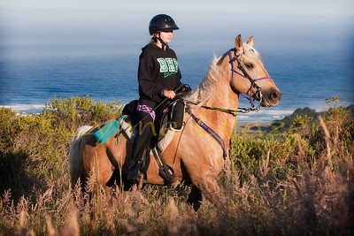 A good looking gaited beast at the inaugural Mendocino Magic ride.