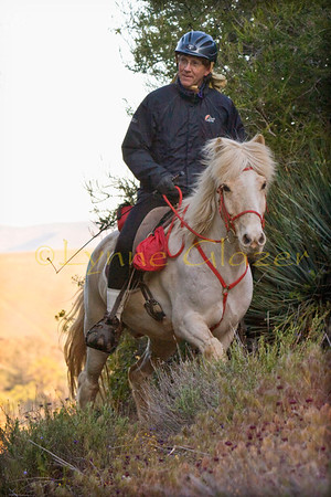 If you enjoy going further, faster--distance rides are probably for you.  Participants have horses of all breeds, though there's a preponderance of Arabians and crosses.  This is John Parke and his Icelandic Skoldjur.  His Remington is the record holder for gaited breeds, at over 11,000 miles.
