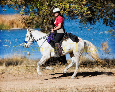 Mustang Lee and owner Rebecca Florio school in dressage when not on trail.  Lee has finished the Tevis ride.  Rebecca's other endurance horse is an Arabian mare, who has also finished Tevis.  Both do multi day rides as well.  This shot is from the Tejon Thanksgiving ride, with Castac Lake in the background.