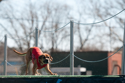 dockdogs_washington nc_304