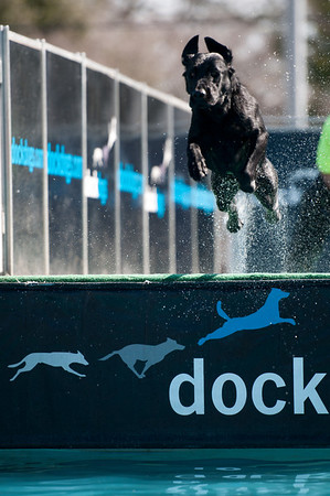 dockdogs_washington nc_229