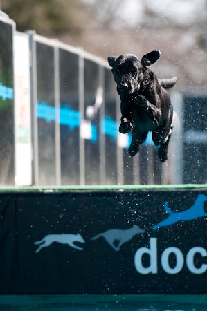 dockdogs_washington nc_230