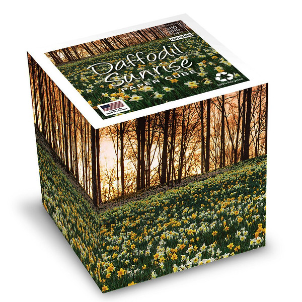 DaffodilSunrise_81Rm04qLl+L _SL1140_