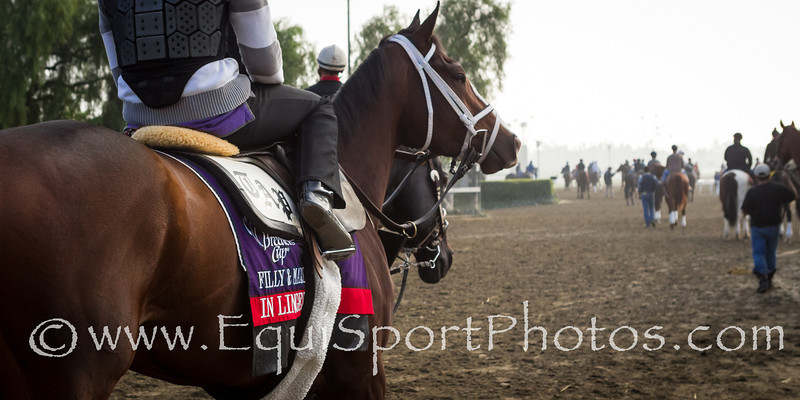 In Lingerie goes out for a gallop at Santa Anita 11.01.2012