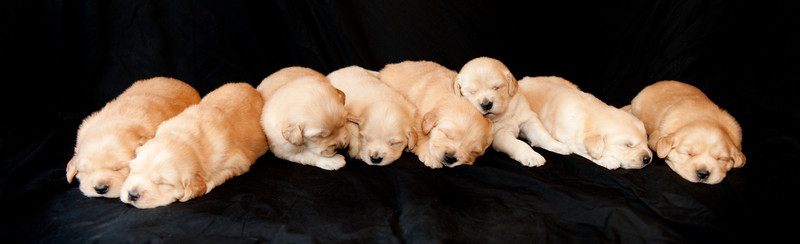 Puppies 85
