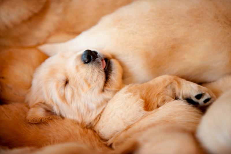 Puppies 64
