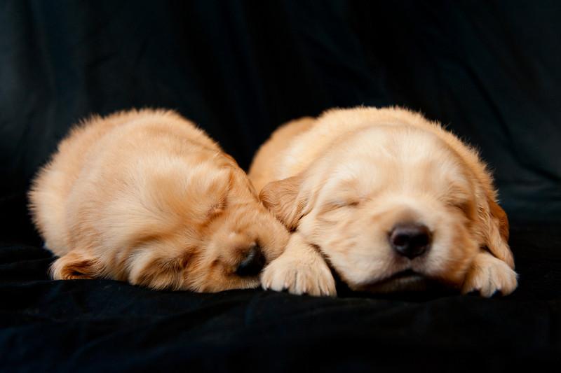 Puppies 107