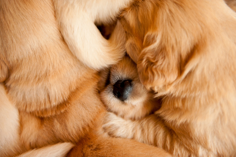 Puppies 41