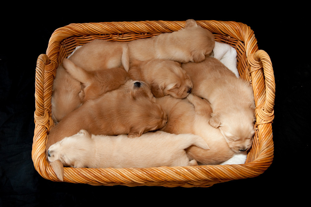 Puppies 31
