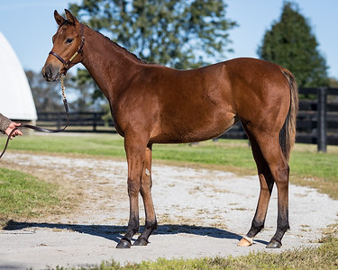 Treasure Box filly at Elm Tree 10.22.18.