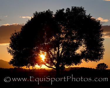 EmpireScenic_07 01 2010_esp-8566