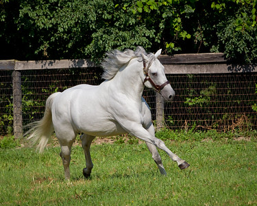 SilverWagon_06 29 2010_esp-7122