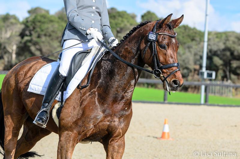 Bloomfield Royal Prince - ridden by Karlie Owen