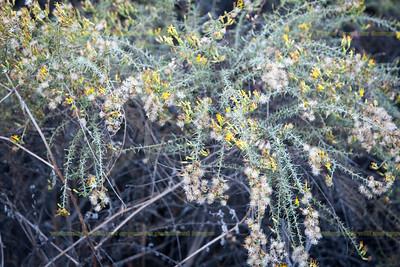 39-4472  Still lots of flowering natives in Harford Springs Park.