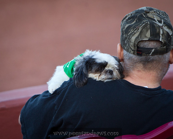 "Dogs at the Lexington Legends game for ""Bark In The Park"" on 05.14.2011"