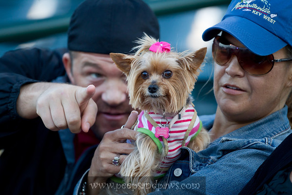 """Dogs at the Lexington Legends game for """"Bark In The Park"""" on 05.14.2011"""