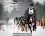 Kalkaska Dog Sled Races :