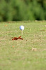 BAS_Golf_2009 034