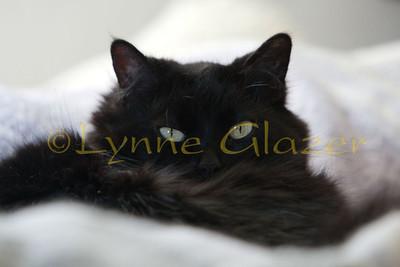 Chloe-7327